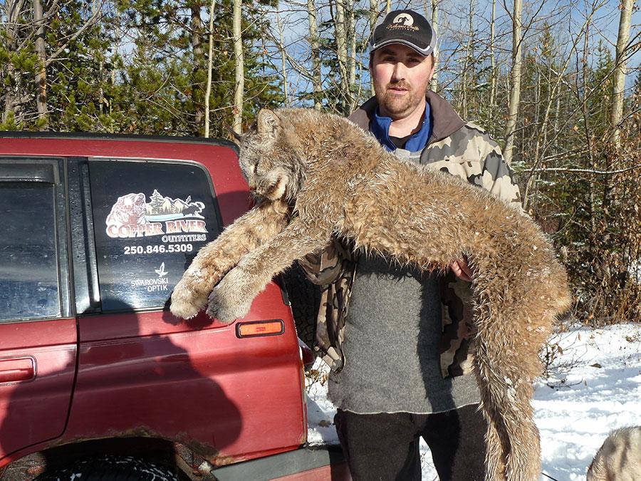 BC Lynx Hunt