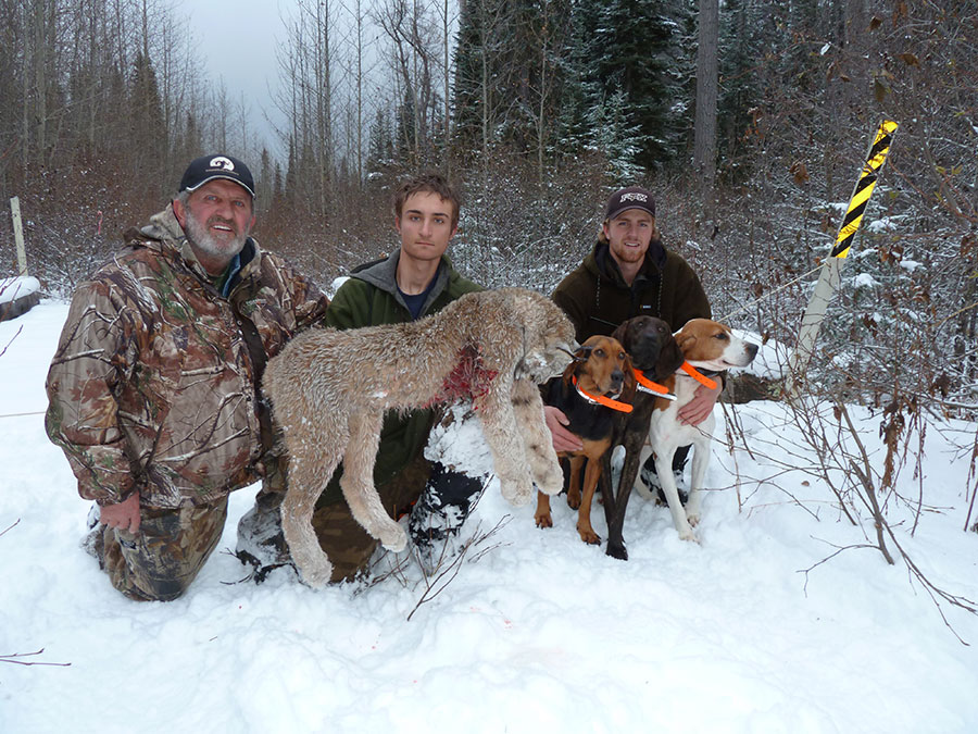 BC Winter Hunt for Lynx
