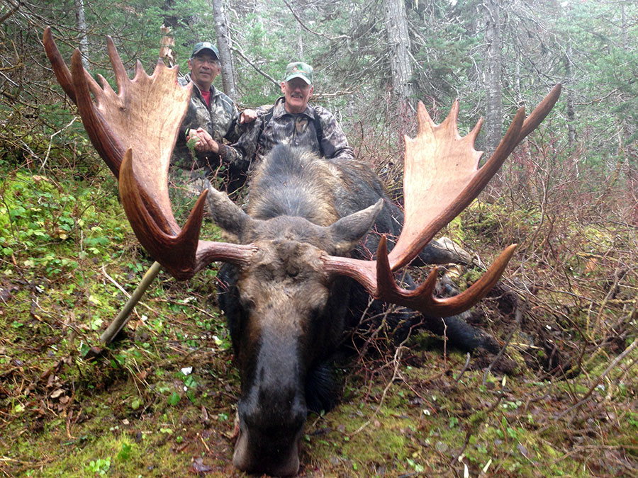 Falll Moose Hunt in BC