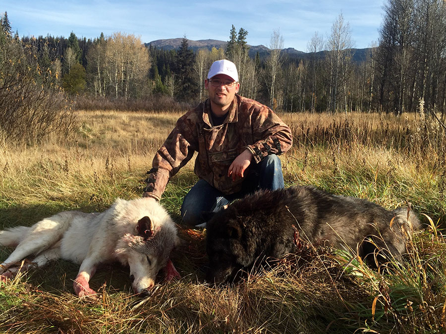 Winter Wolf Hunt in BC