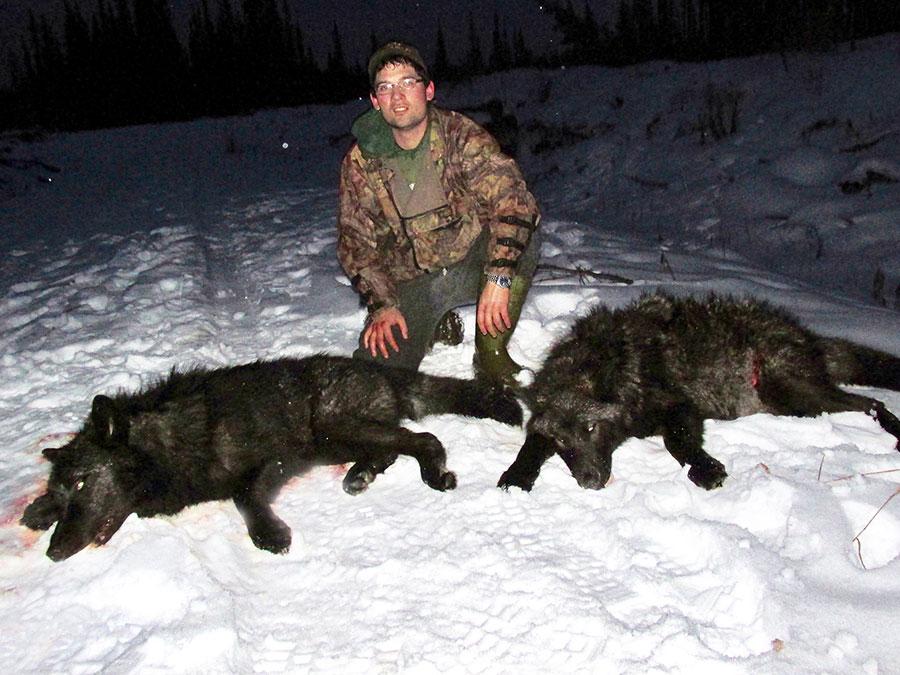 BC Wolf Hunting